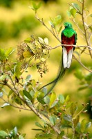 Birds of Costa Rica photo
