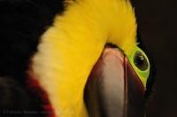 Birds of Costa Rica. photo