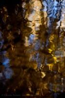 MILL CREEK REFLECTIONS, Edmonton, Alberta, Canada photo