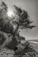 Juan de Fuca Trail, Mystic Beach, Vancouver Island photo