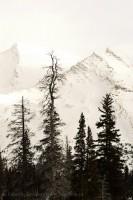 Nigel Peak, Banff National Park photo