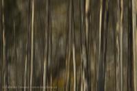 overlander trail in November, Jasper National Park, Alberta, Canada photo