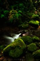 Juan Castro Blanco National Park, Costa Rica photo