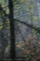 Mill Creek Impression