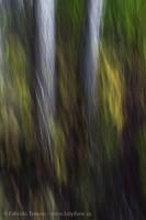Mill Creek Impression photo