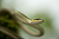 PARROT SNAKE, note cards,  photo