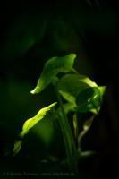 rainforest, plant life, costa rica photo