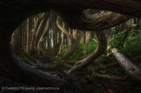 Twisted Forest