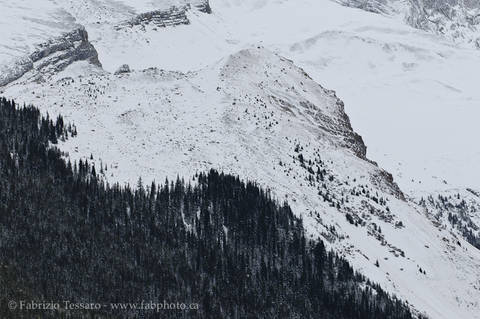 Jasper National Park, Alberta, Canada,Queen Elizabeth Range