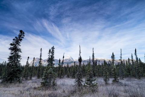 Fryatt Ponds, Jasper National Park