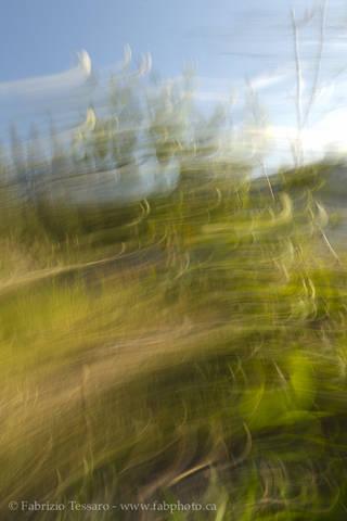 Grass abstract, Jasper National Park, Alberta, Canada