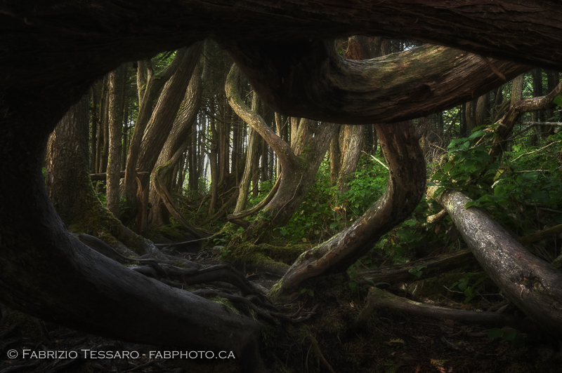 Botanical Beach, Port Renfrew, Vancouver Island photo