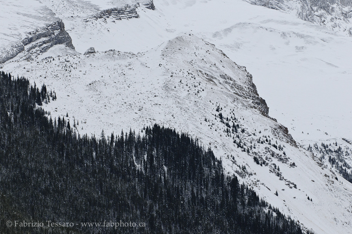 Jasper National Park, Alberta, Canada,Queen Elizabeth Range photo