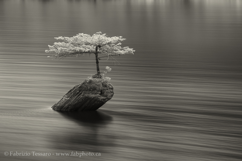 Fairy Lake, Bonsai,Vancouver Island photo