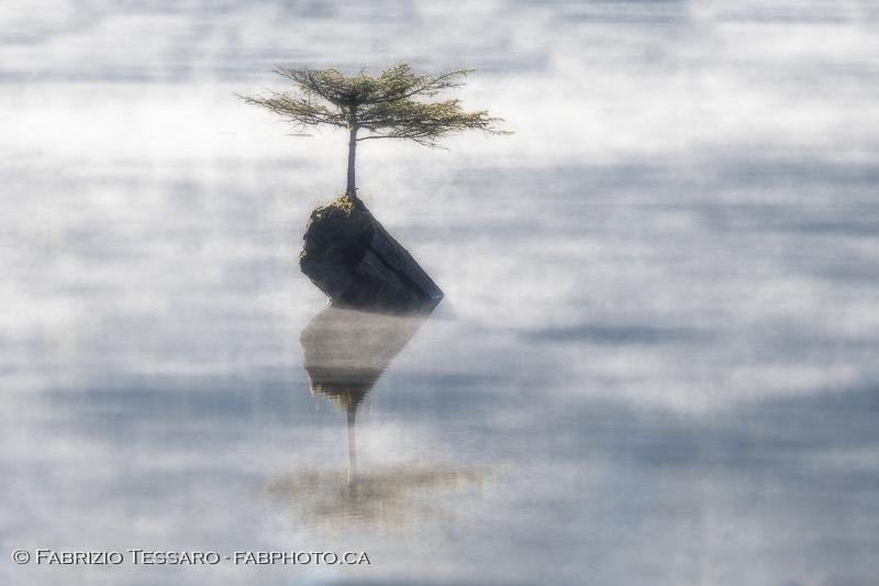 Fairy Lake, Port Renfrew, Vancouver Island photo