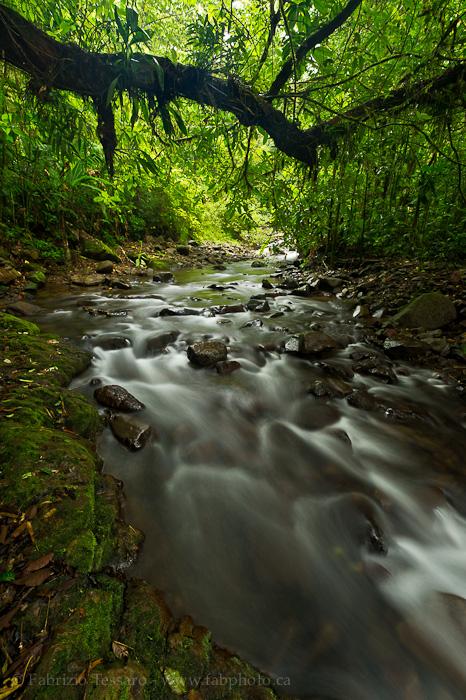 bosque de paz, bajos del toro, costa rica photo