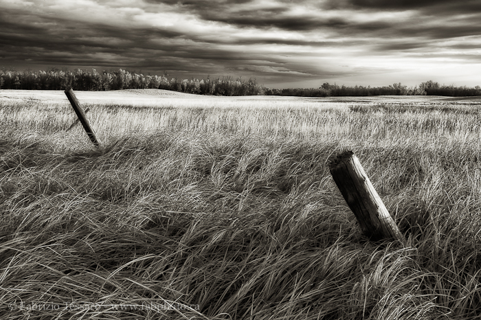 Sherwood Park,  Alberta, Canada, Alberta Prairie photo