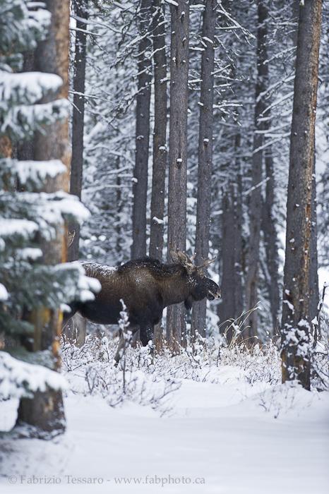 Jasper National Park, Alberta Canada photo