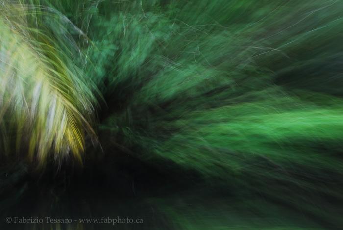 tortuguero national park, costa rica,, photo