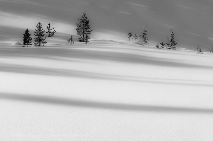 Trees, Winter, Abraham Lake,shadows, photo