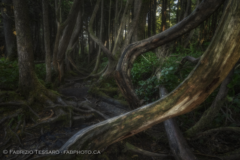 Botanical Beach, Port Renfrew, Vancouver Island, photo