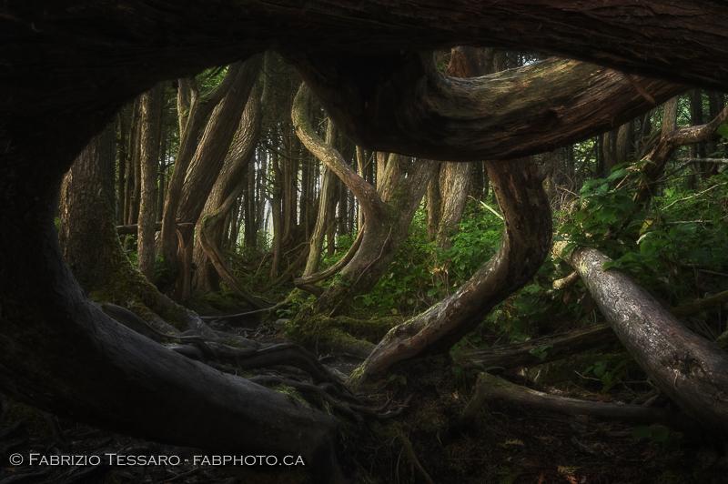 Botanical Beach, Port Renfrew, Vancouver Island, photo