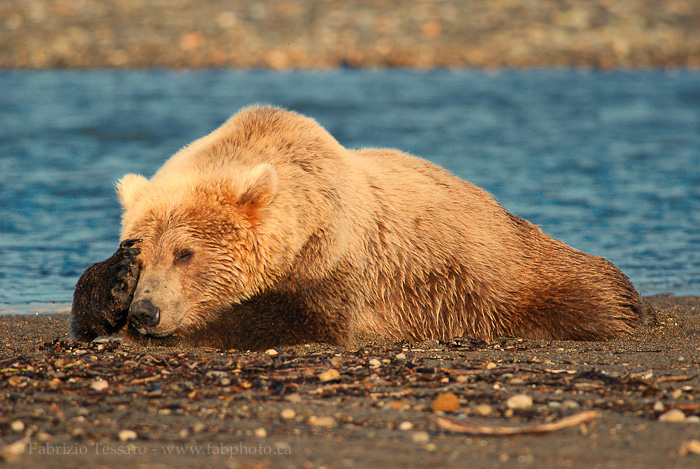 Katmai National Park, Alaska, USA, photo