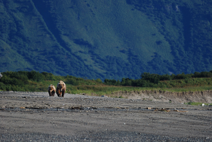 Katmai National Park, Alaska, USA, photo