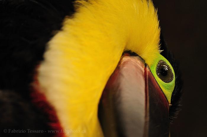 Birds of Costa Rica., photo
