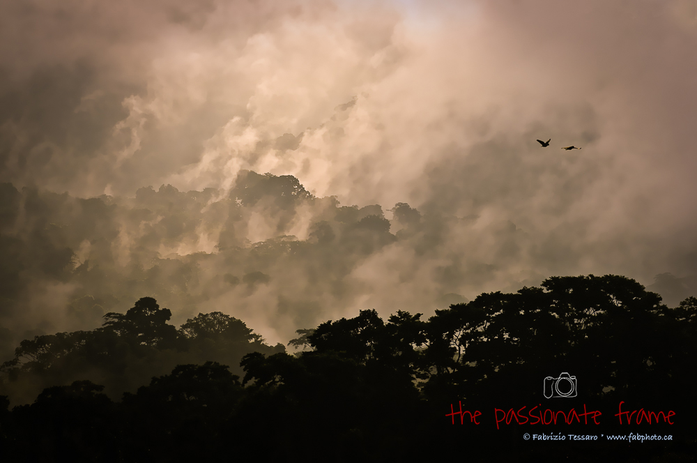 A typical morning  in the cloud forest near Arenal Volcano in Costa Rica