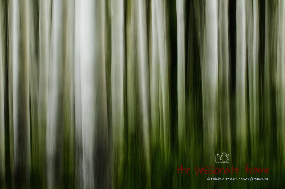 Art in Nature, Aspen, Black Bear, Canada, Elk, Fine Art Greeting Card, Fine art Print, Impressionism, Jasper National Park, Landscapes, Wapiti, Wildlife, tree abstract, photo