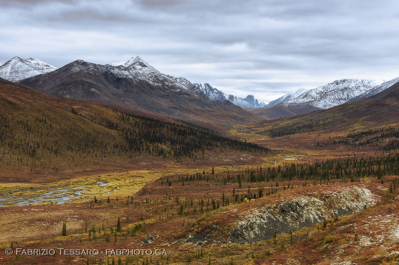 Tombstone Territorial Park, Yukon Territories, Canada, Talus Lake, Grizzly Lake, Divide Lake,Yukon Fall Colours, colors, photo