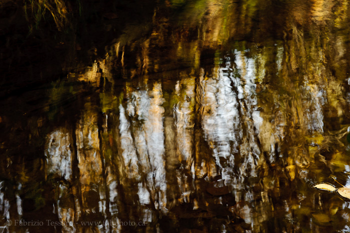 MILL CREEK REFLECTIONS, Edmonton, Alberta, Canada, photo