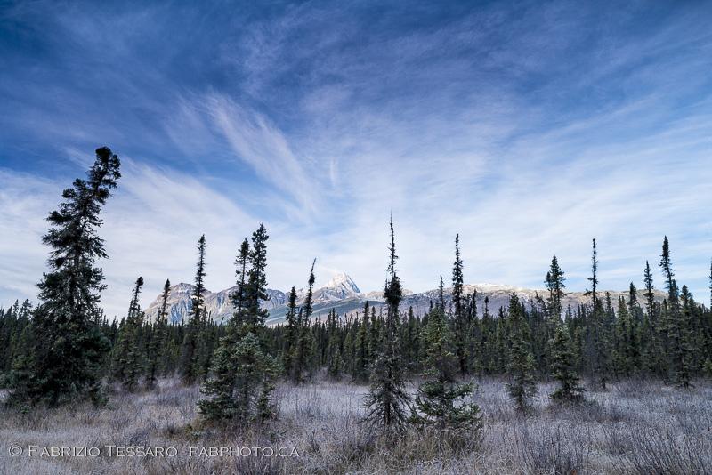 Fryatt Ponds, Jasper National Park , photo
