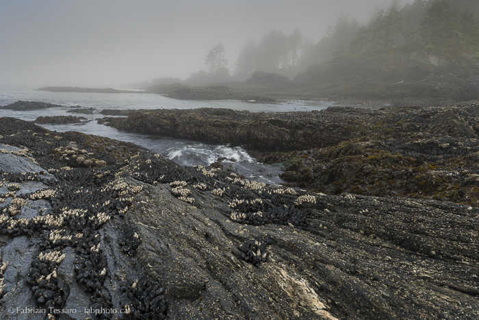 Port Renfrew,Vancouver Island,Botany Bay,, photo