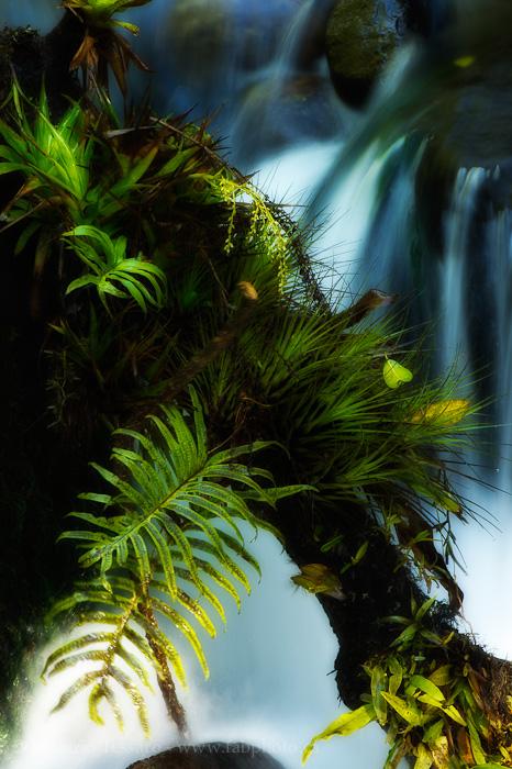 Bajos del toro, bosque de paz, Costa Rica, photo