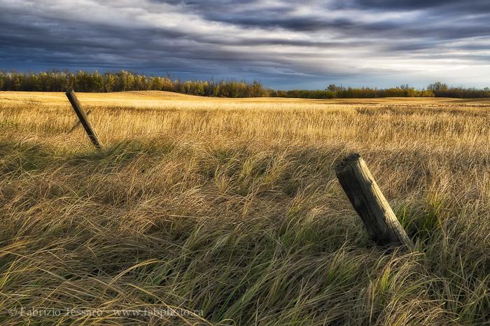 Sherwood Park, Alberta Prairie, Canada, photo