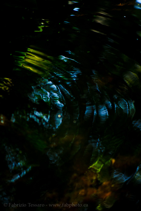 RAINFOREST REFLECTIONS, photo