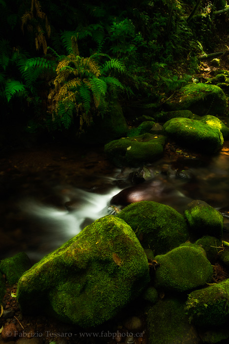 Juan Castro Blanco National Park, Costa Rica, photo