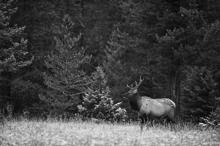 Jasper National Park, Alberta Canada, photo